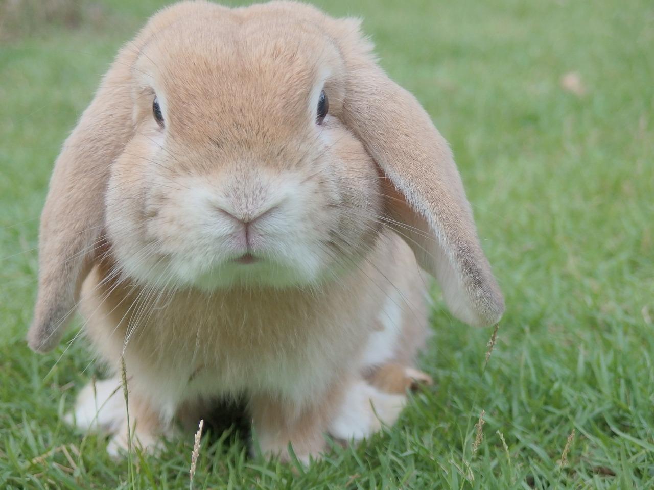 ウサギ肉のダイエット効果